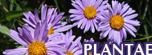 GALLERY - PLANTAE